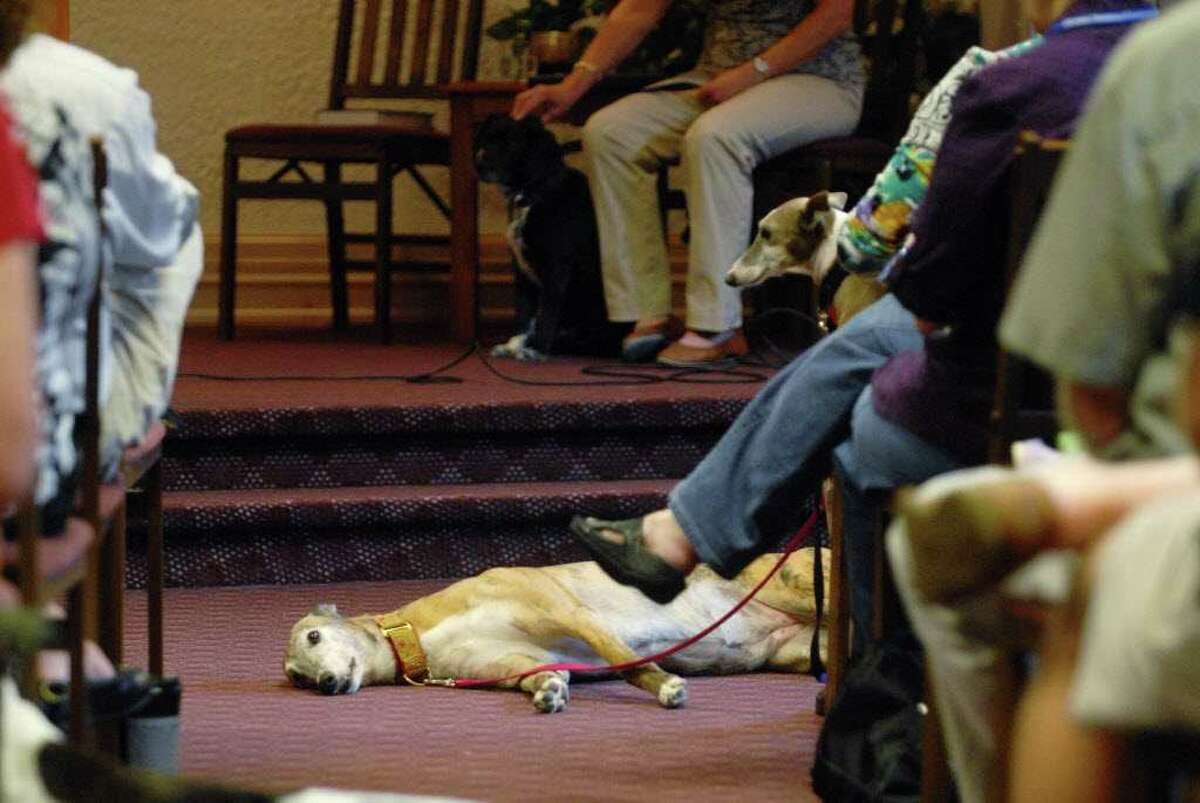 Dogs rest in the isle and on their owners' laps Sunday during a Blessings of the Animals service at Unitarian Universalist Congregation of Saratoga Springs. (Paul Buckowski / Times Union)