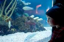 looking at a exotic fish in aquarium.