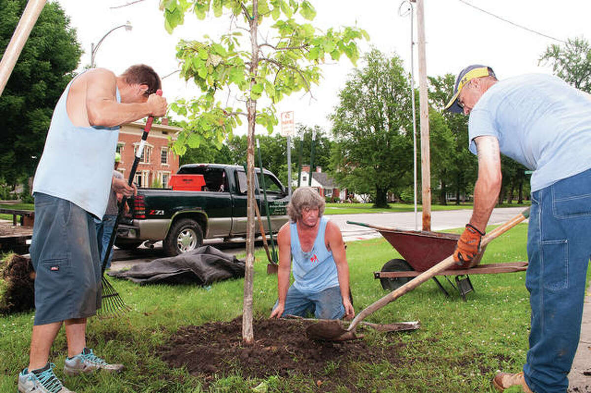 Chris Hartwick (center), owner of Chris Hartwick Landscaping, and employees Josh Perabeau (left) and Casey Hunter plant a tree Thursday along State Street. Ten trees were planted at several Jacksonville spots, including the Illinois School for the Deaf, Illinois College and the downtown square. The plantings are part of the Jacksonville Tree Project, an effort to line the streets of Jacksonville with a canopy of trees. Newly planted trees have a green ribbon tied to them.