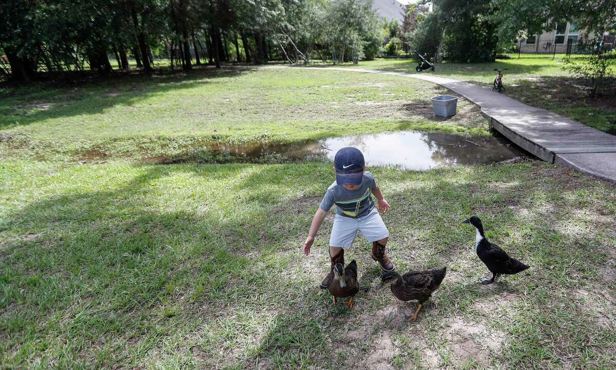 Henry Sokol, 3, plays with ducks raised by his dad, Adam Sokol, a Cypress resident, at The Park at Arbordale pond, in Cypress, Friday, May 29, 2020. Sokol started raising ducklings just a few weeks into the pandemic, so that the pond could have some more ducks in it when they are fully grown. As a community engagement opportunity, they've been holding a little 'social hour' for the ducklings to meet children in the neighborhood, which has helped parents to get their kids entertained for a little while during the week. They used to just do it randomly, and now they're doing it for the next three weeks for the ducklings to meet their 'fans' as they've been calling them, before the ducks get released into the pond.