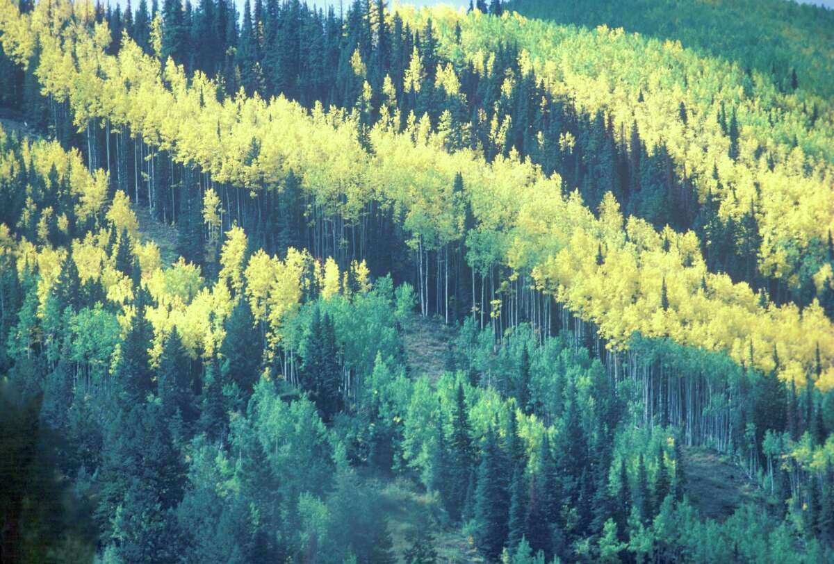 The San Juan National Forest, with the San Juan River meandering through it, is known for its towering aspen trees.