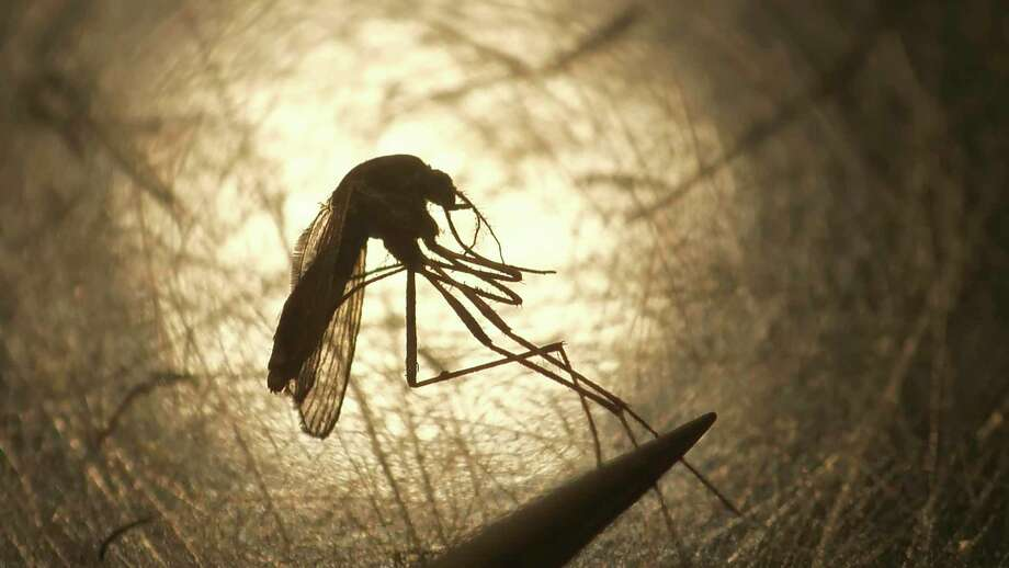 Mosquitos can carry Eastern equine encephalitis, a rare and deadly mosquito-borne illness. The state Finance Advisory Committee approved funding to set up 15 new mosquito trapping, surveillance and testing locations in Connecticut. Photo: Rick Bowmer / Associated Press File Photo / Copyright 2019 The Associated Press. All rights reserved.