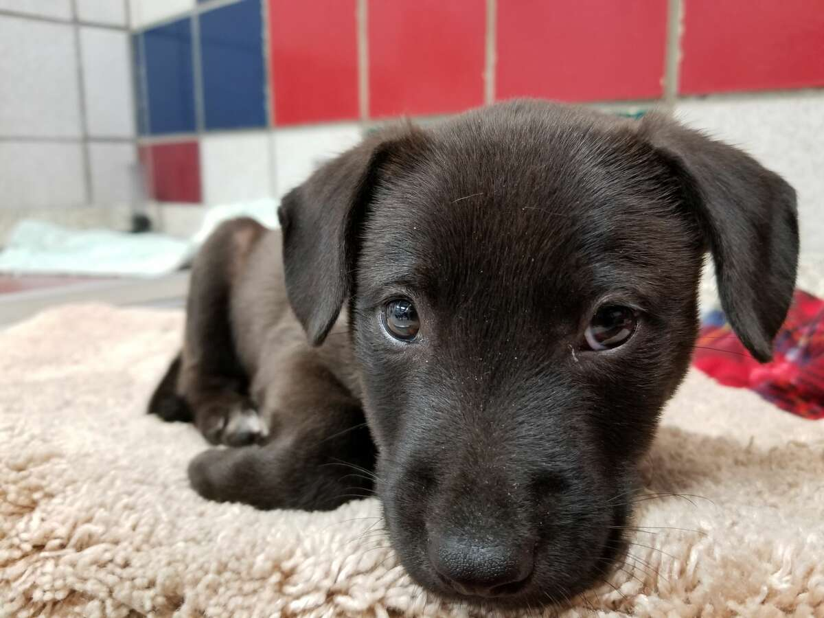 Thanks to a partnership with Swiffer and North Shore Animal League America, the shelter is offering $50 off adoption fees for 50 approved adopters through June 14.