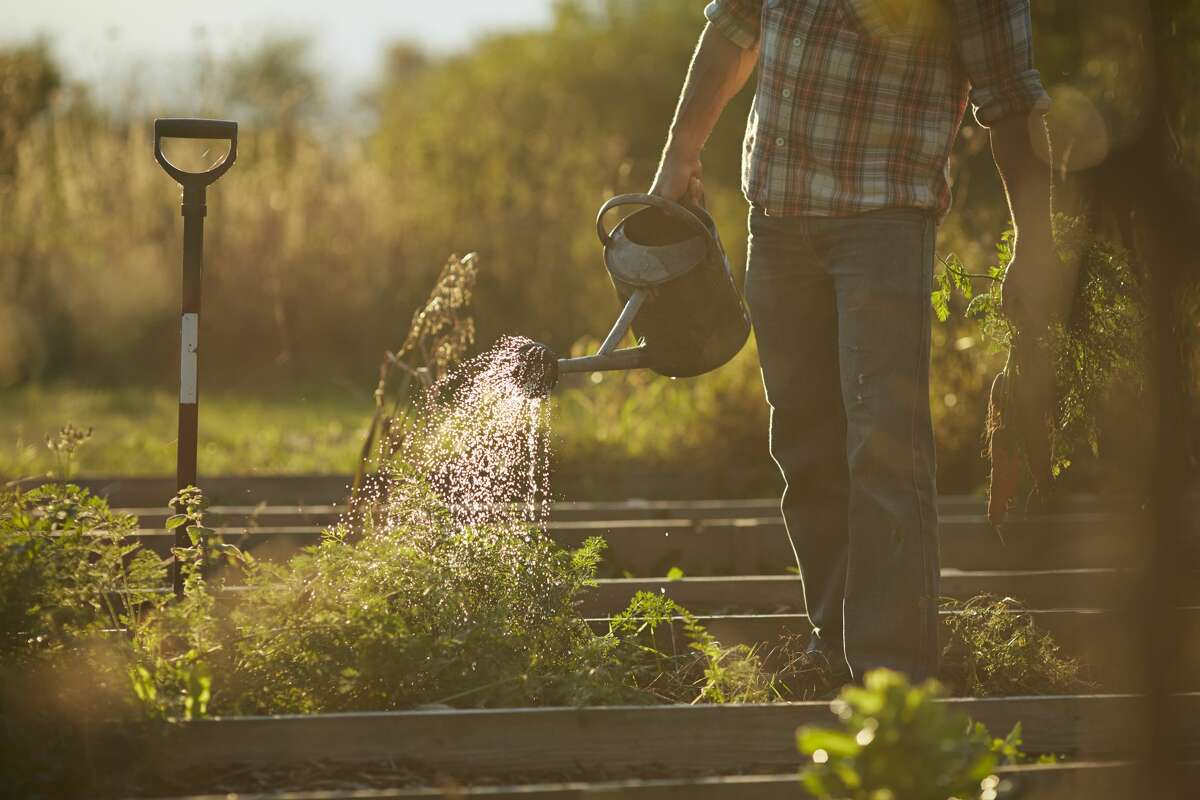 This tip should seem obvious, but as the weather gets hotter you will need to pay more attention to how you are watering your garden. Experts recommend watering deeply, but infrequently so your plants can grow deeper, more rugged root systems.