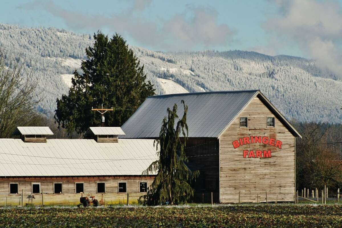 Biringer Farm: Arlington - 45 minutes north of downtown Seattle Currently open with daily updates regarding which days U-pick will be available. Most days run 9 a.m.-4 p.m. or until sold out of U-pick strawberries.