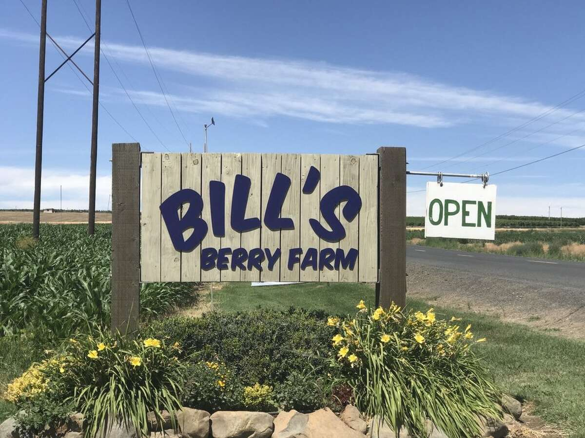 Bill's Berry Farm: Grandview - 3 hours southeast of downtown Seattle U-pick cherries, blueberries and raspberries on Saturdays and Sundays, 9 a.m.-3 p.m. Bring your own plastic containers for picking.
