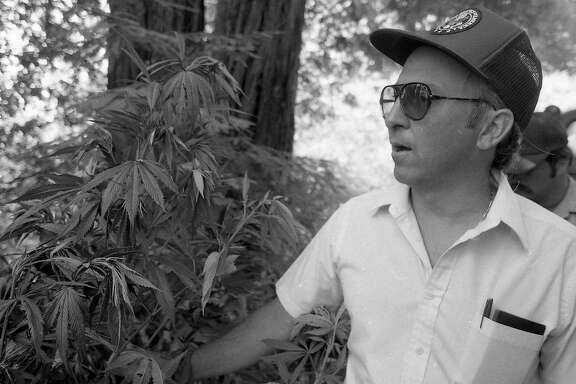 Campaign Against Marijuana Planters officers raided farms and public lands looking for marijuana crops, August 6, 1985