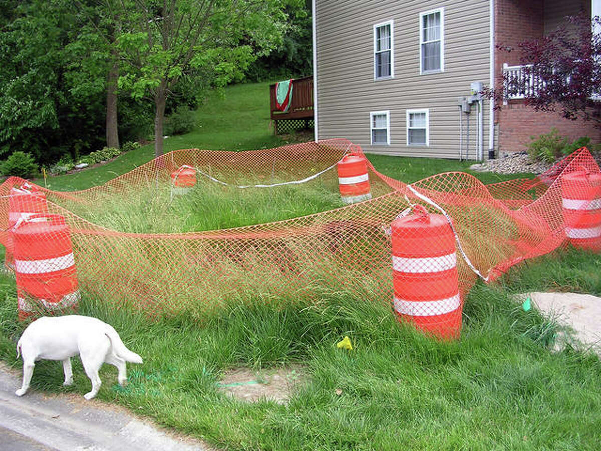 Animals such as this dog are one of the reasons residents want this sinkhole sealed. Fears of children, pets or wildlife getting stuck in the hole are valid one resident said.