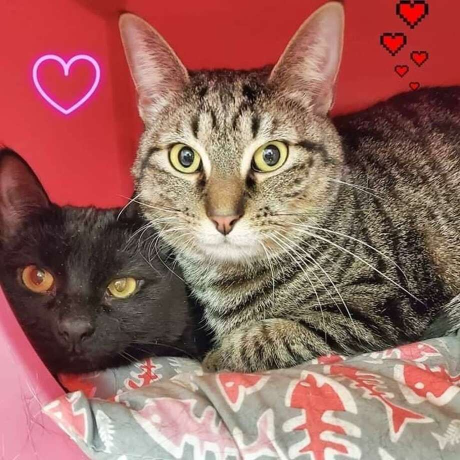 Best buddies Minnie & Daisy are looking for a furr-ever home together. Photo: Contributed Photo
