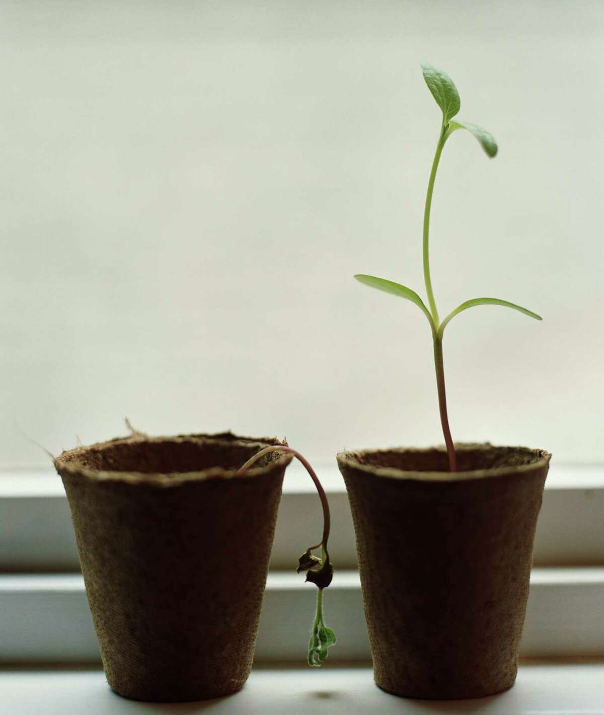 We will flourish after coronavirus. You better believe it. (Getty Images)