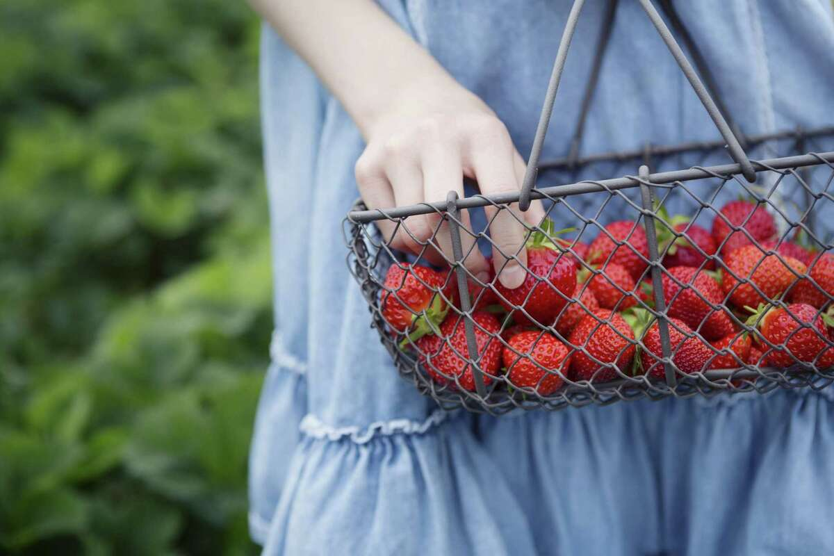 A woman holding a basket of strawberries.
