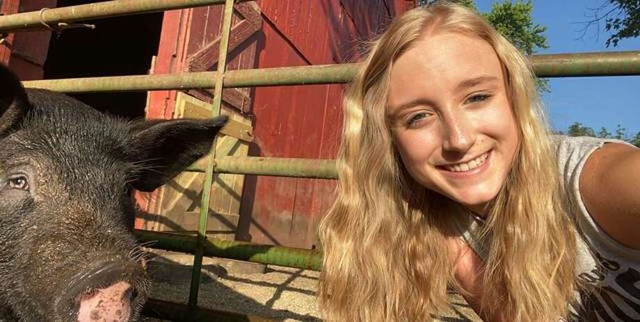 Emily Barr, 18, of Carlinville, with one of her pigs that she is showing virtually at this year's online Macoupin County Fair via the fair's Facebook page. Photo: Submitted