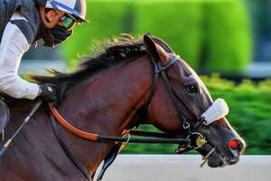 Tiz the Law works on the main track Sunday June 14, 2020 in Elmont, N.Y. at the Belmont Race Course for his final speed work before the Belmont Stakes which will run next Saturday June 20th. Tiz the Law worked 50.42.   Photo by Skip Dickstein/Special to the Times Union