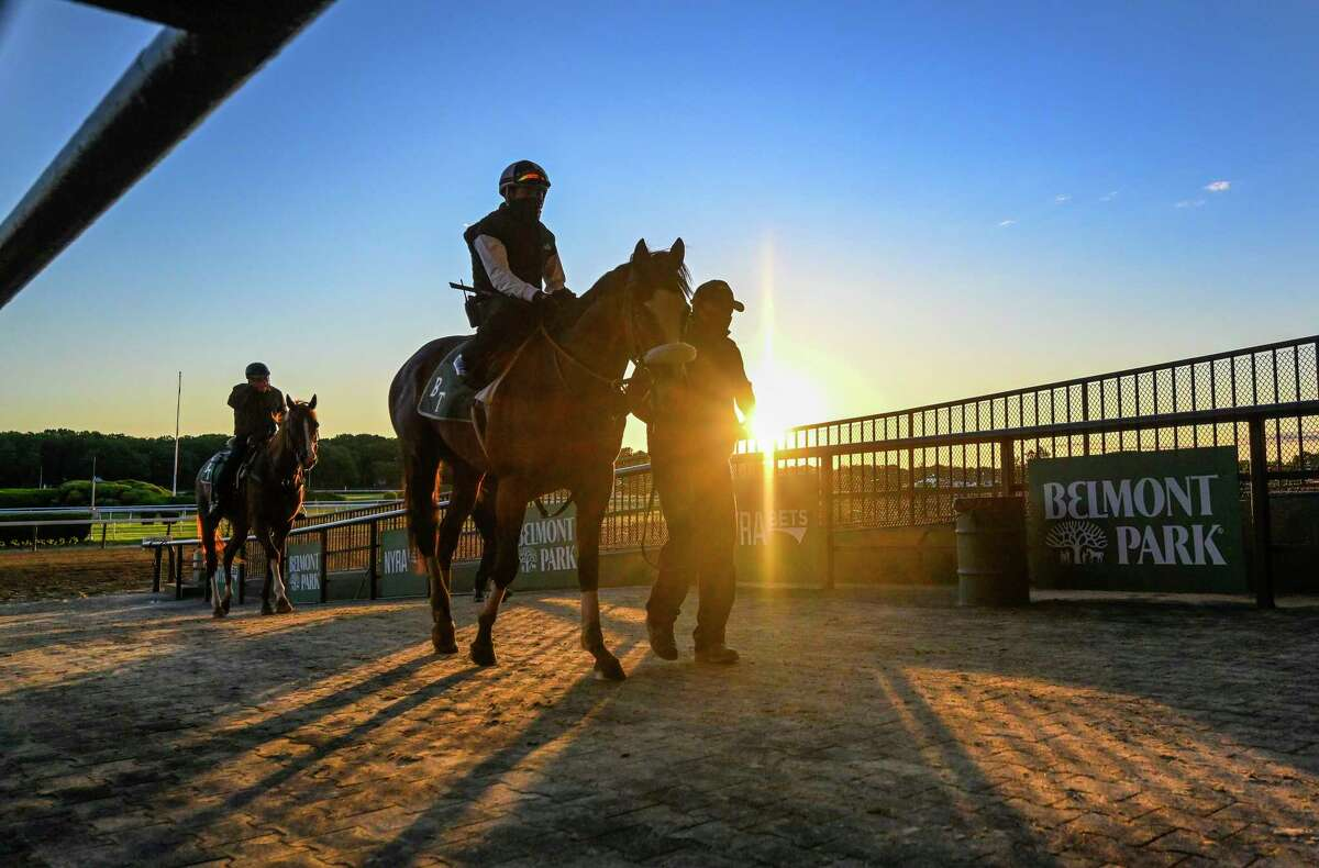 Tiz the Law returns to the barn after his work for The Belmont Stakes as the sun rises on Belmont Park June 14, 2020 in Elmont, N.Y. The Belmont Stakes will be run on June 20th at Belmont Park. Photo by Skip Dickstein/Special to the Times Union