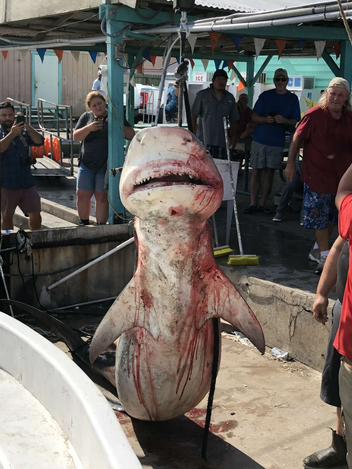 13-year-old Texas boy catches nearly 900-pound shark in Port Aransas during offshore trip: A 13-year-old boy caught an 11-foot, 6-inch, nearly 900-pound tiger shark during a 36-hour offshore trip in Port Aransas on June 15, according to an employee from the charter boating company the teenager was on. Click here to read more.