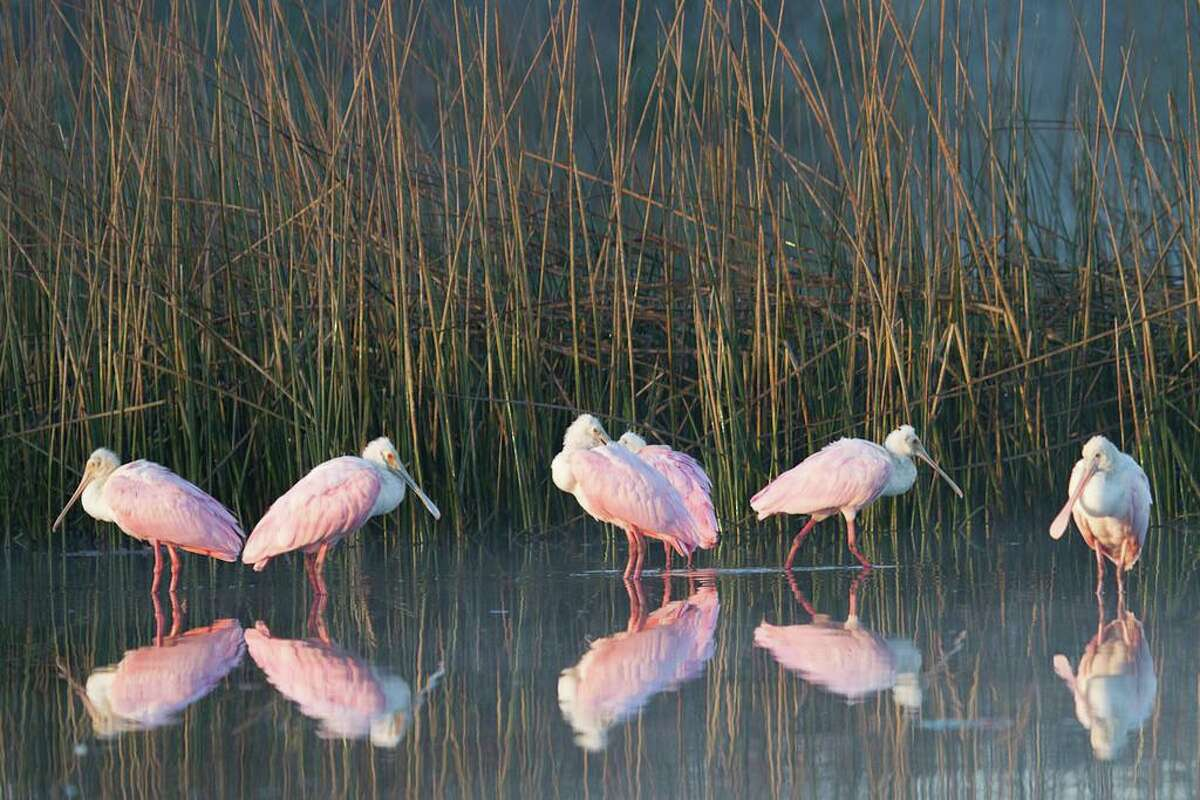 The Armand Bayou Nature Center in Clear Lake features strollable marshland to take in the wildlife.