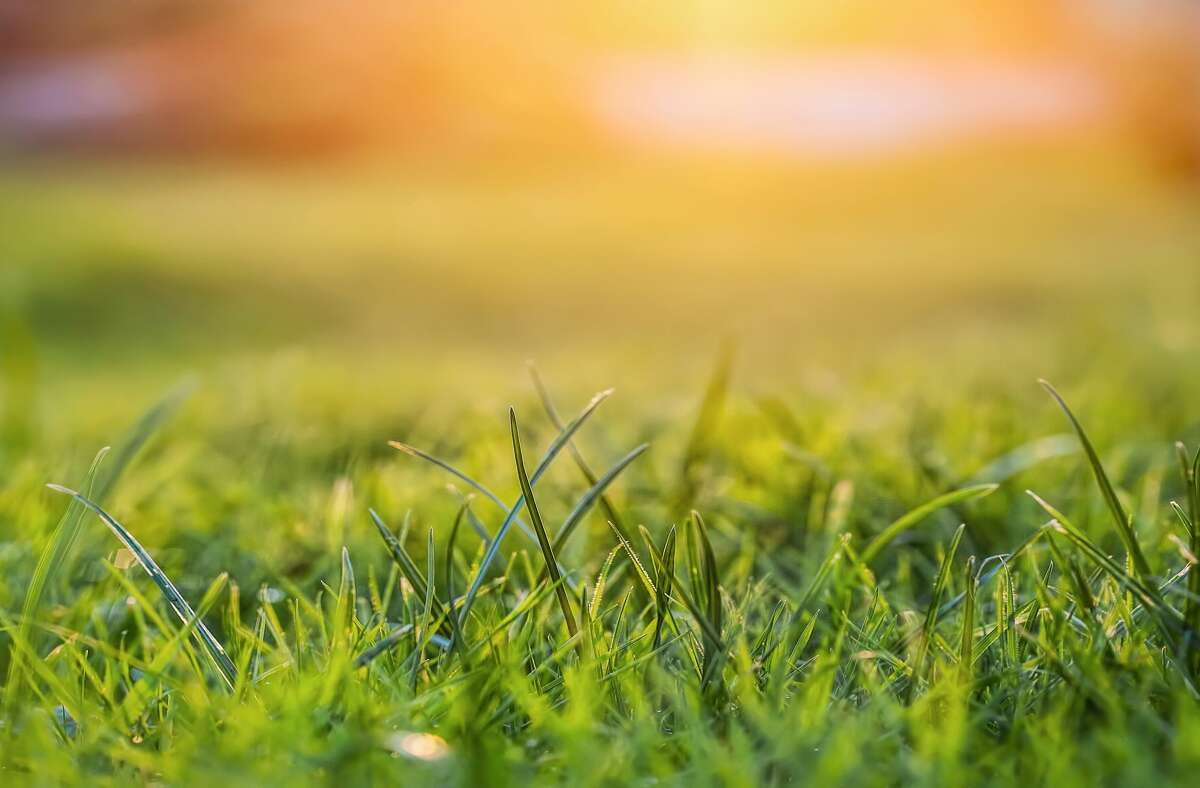 """""""Once we were given notice that our grass was too green because it was winter and didn't match everyone else's brown.""""-Erika Bulow Culver"""