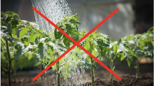 Black Thumb Blunders: 6 Ways You're Screwing Up Your Vegetable Garden