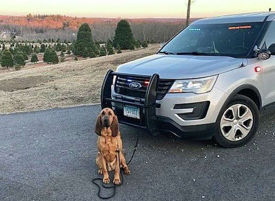 K-9 Ruby and her handler, Trooper Kyle Gorra, of Troop E successfully located a 90-year-old Andover woman on Wednesday, June 17, 2020. A Silver Alert was issued for the woman on Monday, June 15, 2020. She was located unharmed. Photo: State Police Photo