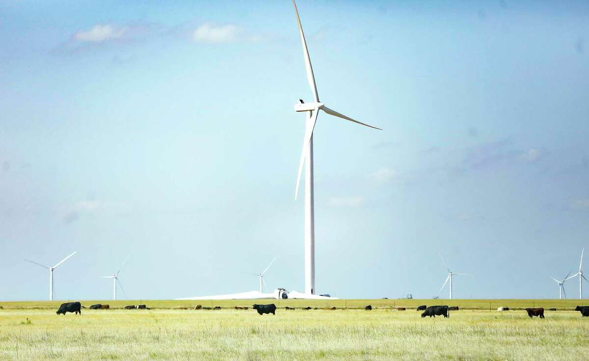 Cows graze in front of a windmill farm in North Texas on Thursday, May 21, 2020.