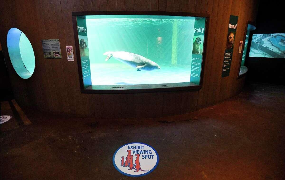 The Norwalk Maritime Aquarium.