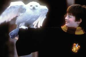 """Daniel Radcliffe in a scene from """"Harry Potter and the Sorcerer's Stone."""""""