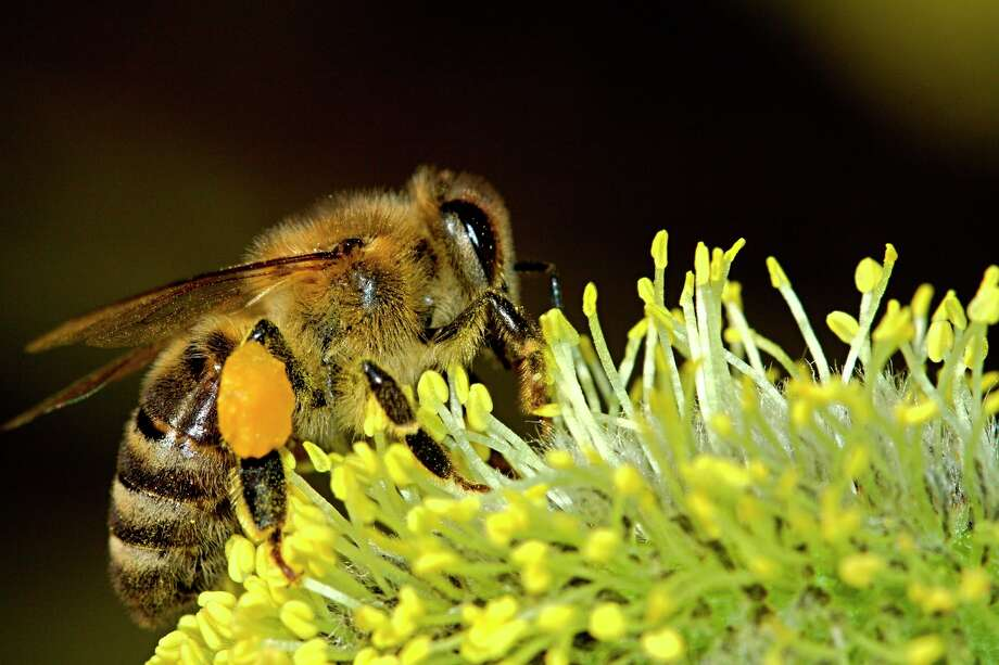 The Benzie Conservation District is reminding Benzie County that June 22 through June 28 is National Pollinator Week. (Courtesy Photo)