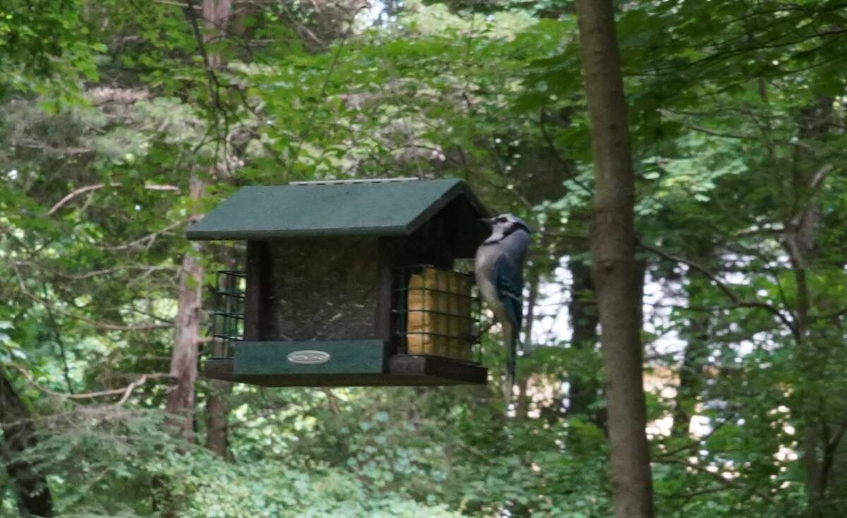 The Bristow Bird Sanctuary and Wildwood Preserve, next to Mead Memorial Park in New Canaan will be getting $199,500 worth of improvements at some point. The work is part of the New Canaan Town Council's recent unanimous vote to approve six of seven projects slated for the 2020-21 fiscal year. The projects are going to be predominantly financed by general obligation bonds.