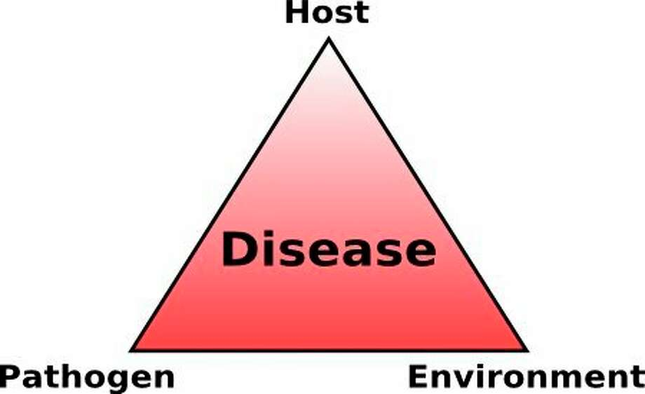 When studying diseases, plant pathologists use the strength of a triangle as a visual aid to understand the control and factors of a disease. (Photo provided/Chuck Martin)