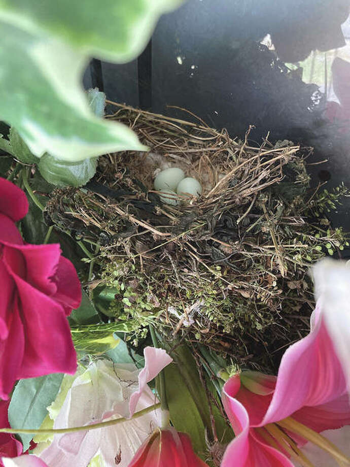"Reader Shirley Smith wondered why some birds were having such a fit when she went out the front door of her White Hall home. Then she saw a nest with three eggs on a wreath on her door. ""No wonder,"" she said."