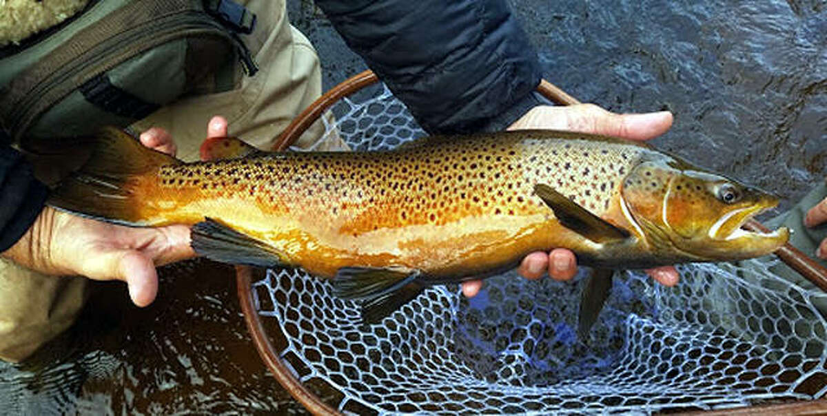A hefty brown trout caught in Lake Superior, which offers exciting fishing action for a variety of species. The terrific fishing for brown trout, lake trout and more is something of a secret among the nation's anglers.