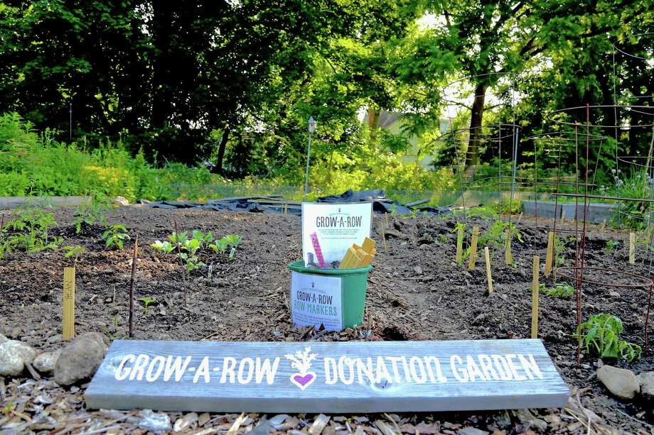 The Grow-a-Row Donation Garden at the Westport Community Garden aims to help share food with those in need, seen here on Friday, June 19, 2020, in Westport, Conn. Photo: Jarret Liotta / Jarret Liotta / ©Jarret Liotta 2020