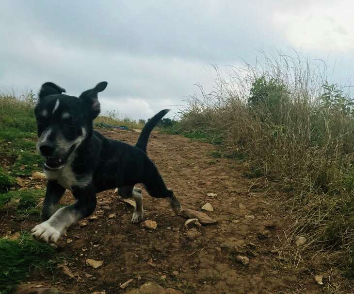 A rescue pup from Fort Davis isn't all that concerned about the origins of his name.