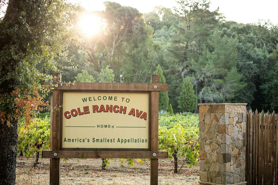 Cole Ranch, a Mendocino County vineyard, is the rare vineyard that is also its own appellation. Photo: Leigh-Ann Beverley