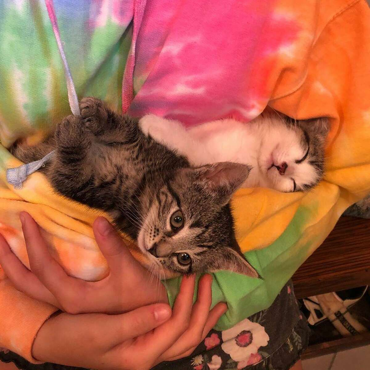 Kittens Leify & Cos at Ridgefield Operation for Animal Rescue - ROAR.