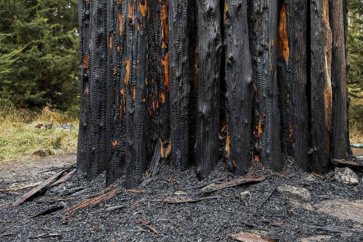 """Andy Goldsworthy's """"Spire"""" stands burned in the Presidio after a morning fire on Tuesday, June 23, 2020 in San Francisco, Calif."""