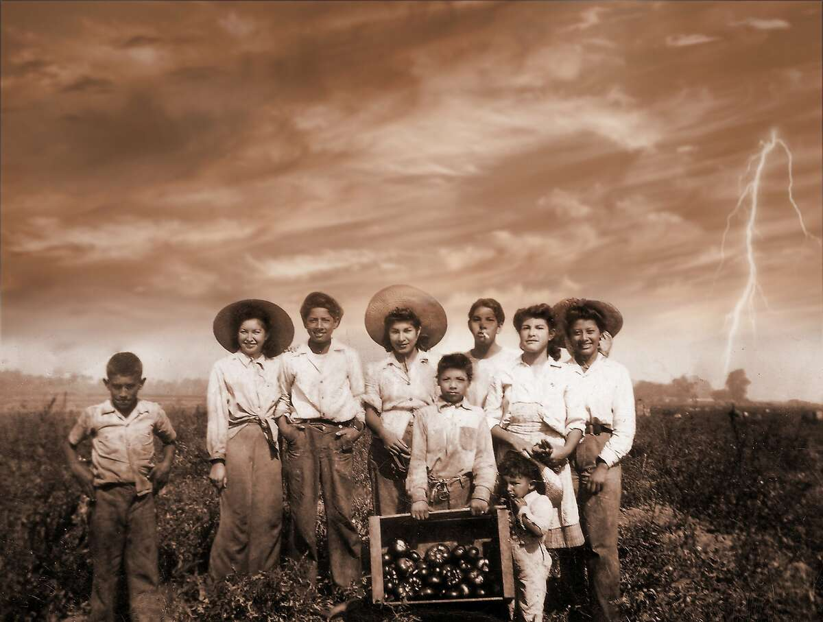 Juanita More's aunts and uncles in the early 1940s picking bell peppers in Hayward