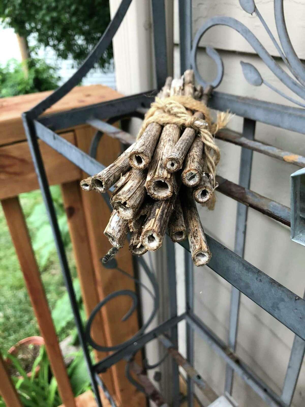 In her Nebraska garden, conservation specialist Jennifer Hopwood uses old stems of ironweed for her bee nest bundles.
