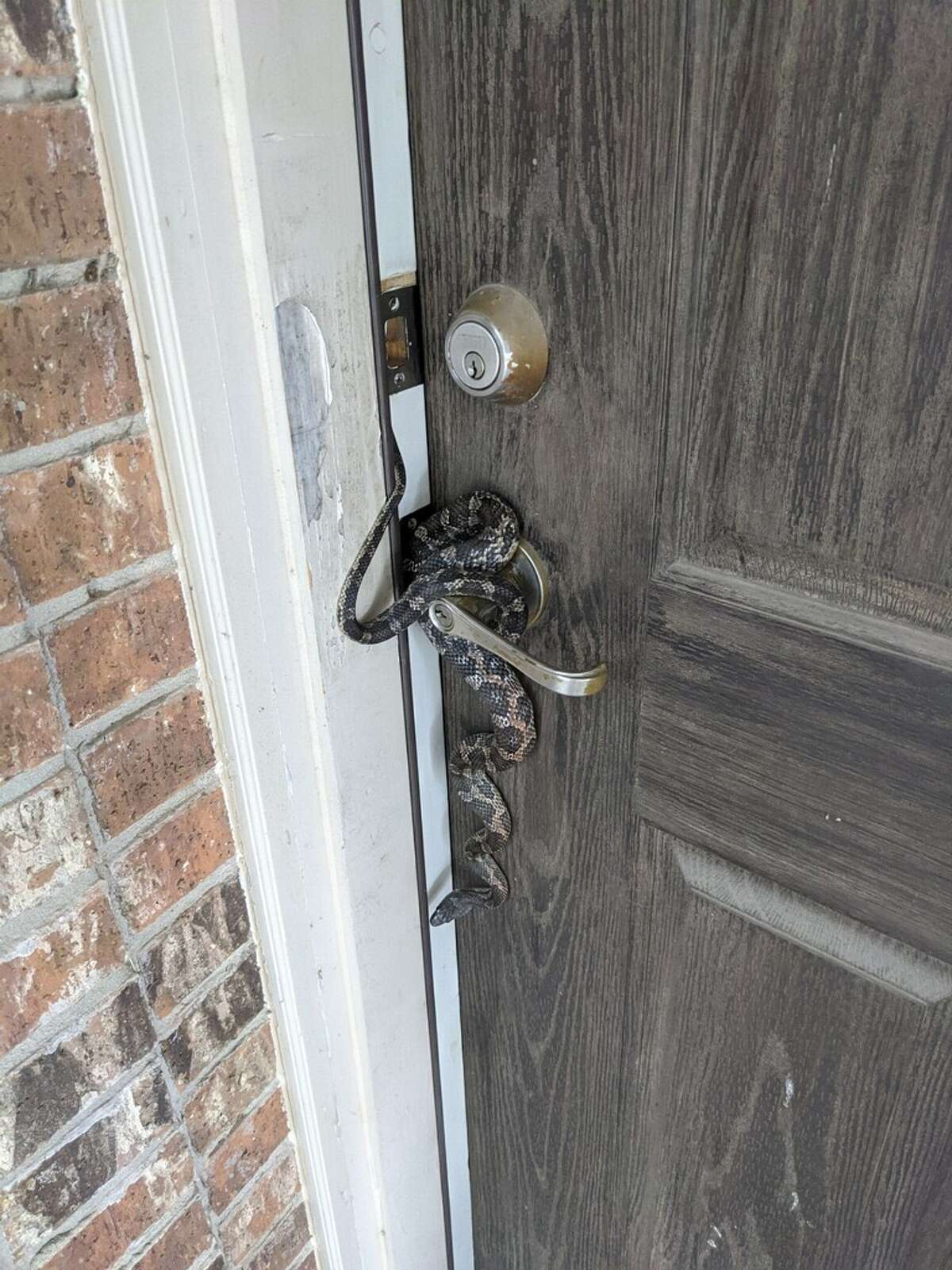 When Jose Perez opened his front door on Sunday, he encountered an unexpected guest hanging on the door knob of his South Side home. The visitor was a