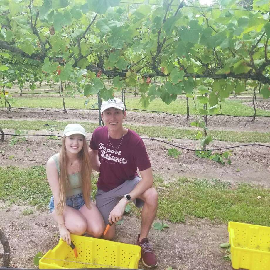 Two young Aggies enjoying their first grape harvest at Wild Stallion Vineyards last Saturday. Photo: Courtesy Photo