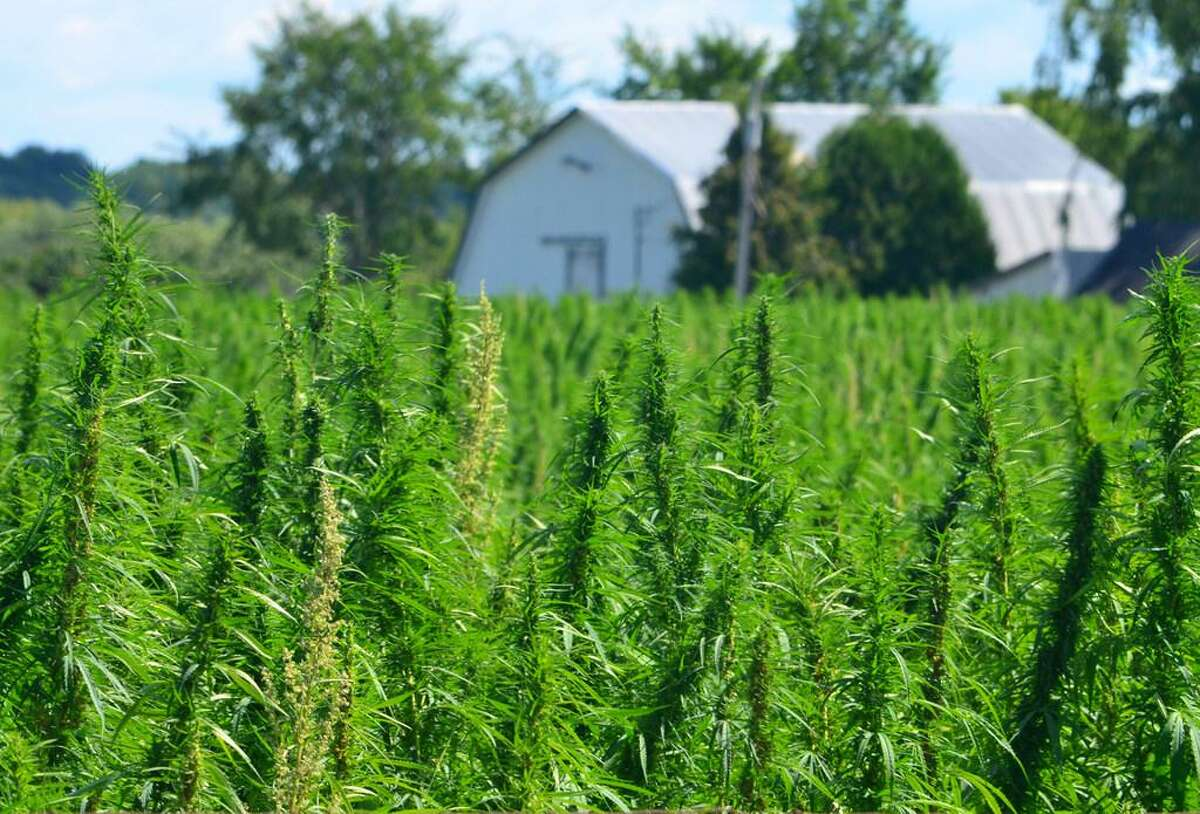 A bill moving forward in North Carolina would put hemp on stronger legal footing in the state, by explicitly allowing it to be used not just for ropes and clothing but also for human consumption, in smokable or edible forms.