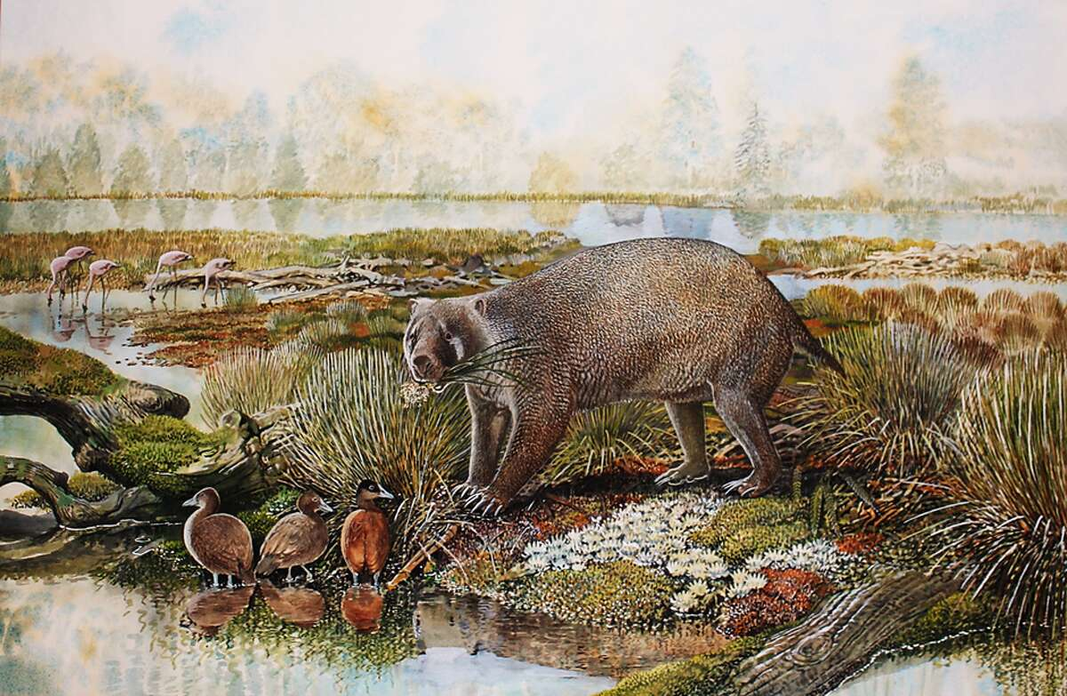 The animal would've been roughly the size of a bear, with teeth that suggest a plant-based diet and powerful limbs for digging.