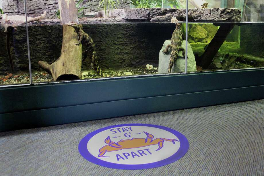 The Maritime Aquarium at Norwalk has reopened, with restrictions. Photo: Maritime Aquarium / Contributed Photo