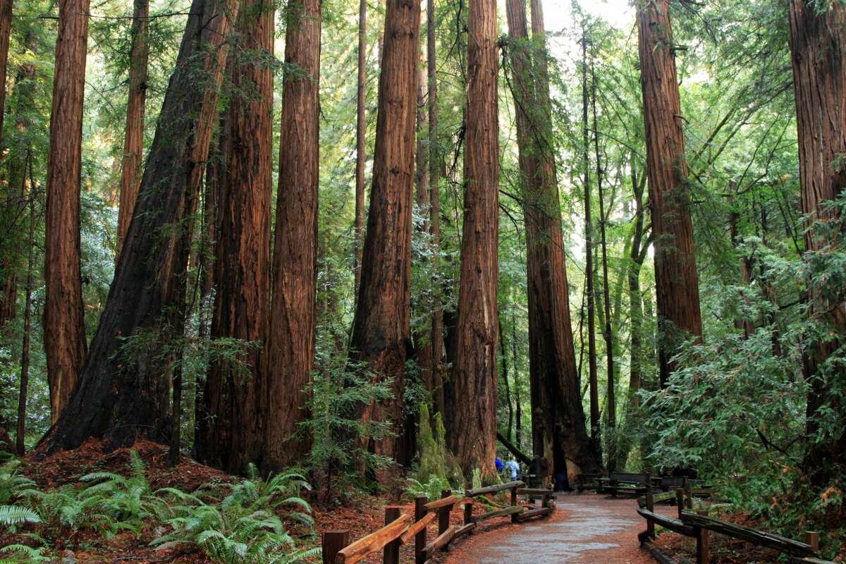 Muir Woods National Monument will reopen to the public on Monday.