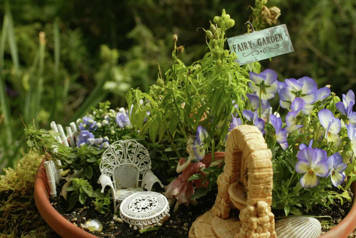 Snap dragons and campanulas, pint-sized furniture and a fairy come together in this fairy garden. (Huntinton Beach) Fairy gardens allow people to excercize their creativity on a small scale.