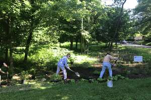 Planting time on the pollinator pathway with Frank Lavaro, Karen DeWahl, and Nancy Dickinson.