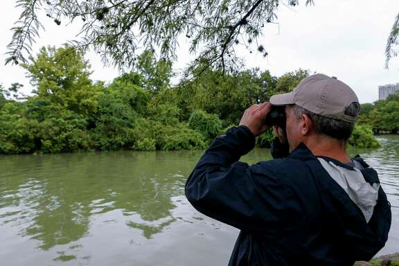 Dr. Dan Brooks, Houston Museum of Natural Science's ornithologist, looks for green herons that can be found at McGovern Lake in Hermann Park on Wednesday, June 24, 2020, in Houston.
