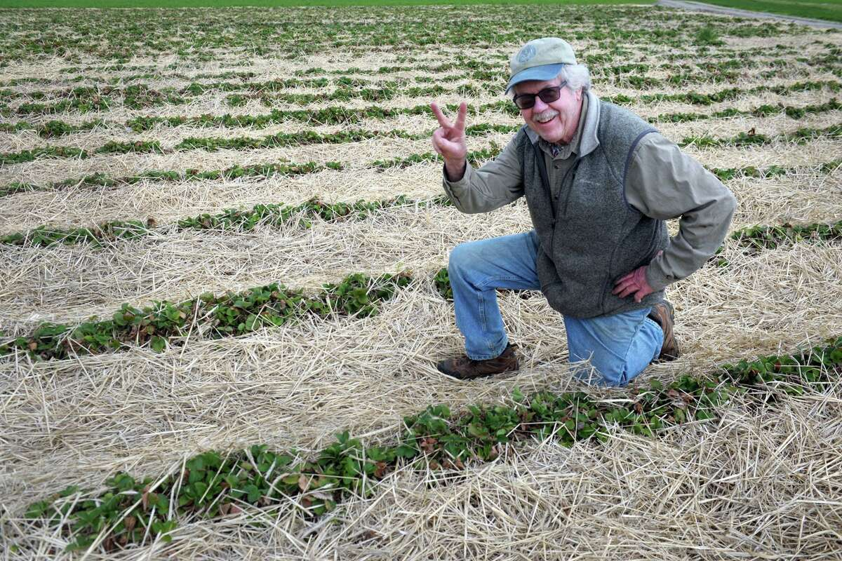 Terry Jones, owner of Jones Family Farms, poses in one of his strawberry fields in Shelton.