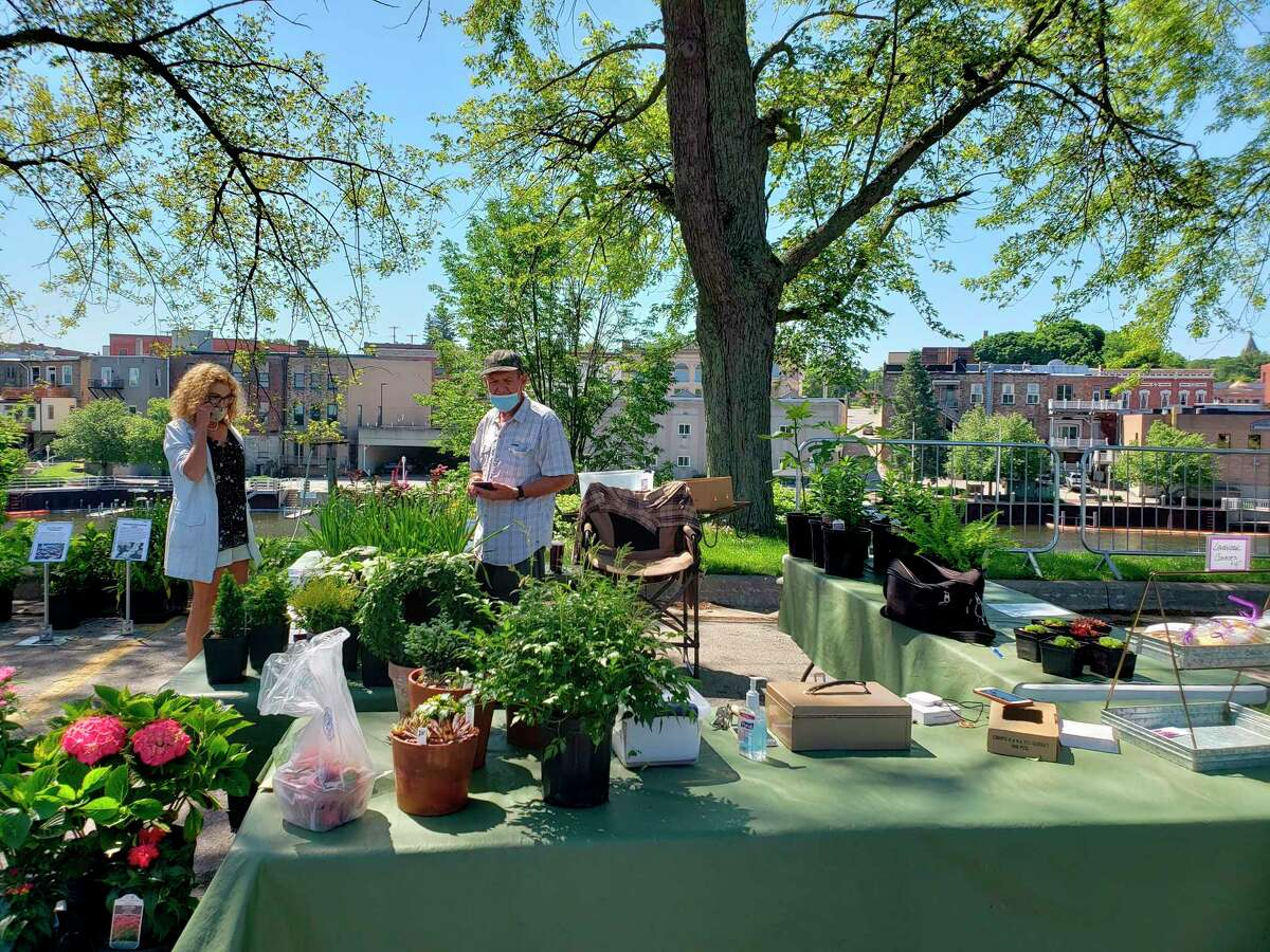 Thomas Harmon's plants were for sale at the Manistee Farmers Market Saturday in downtown. Harmon's booth featured flowering plants such as lilac or phlox as well as other flora known for unique foliage, like figs.(Arielle Breen/News Advocate)