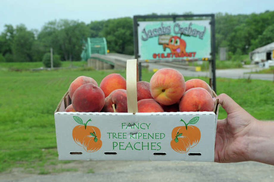 Peach Pickin Time In Calhoun County Peach Growers Open For Business Alton Telegraph Peach time | know your meme. peach pickin time in calhoun county